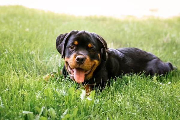 Image of: Haul Flights Delta Bans Emotionalsupport Animals On Longhaul Flights Changes Rules For Puppies Usatodaycom Delta Bans Emotionalsupport Animals On Longhaul Flights
