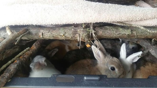 Manchester police are seeking two men they believe dumped domestic rabbits near Harry Wright Lake on Oct. 28. Images courtesy Manchester Township Police Department.