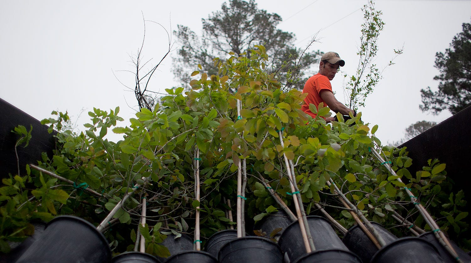 RETREET, a nonprofit that plants trees in communities devastated by natural disaster, turned its attention to Port Aransas, which is still recovering from effects of Hurricane Harvey in August 2017.