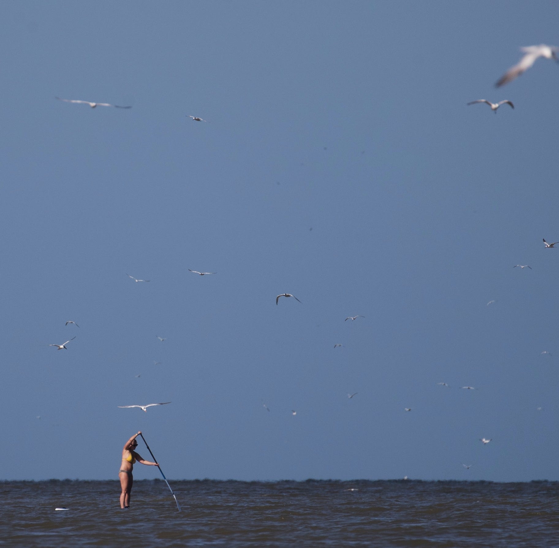 Samples show red tide scarce in Collier, patchy across Lee
