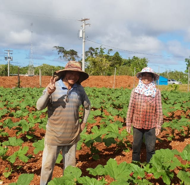Reviving agriculture on Guam