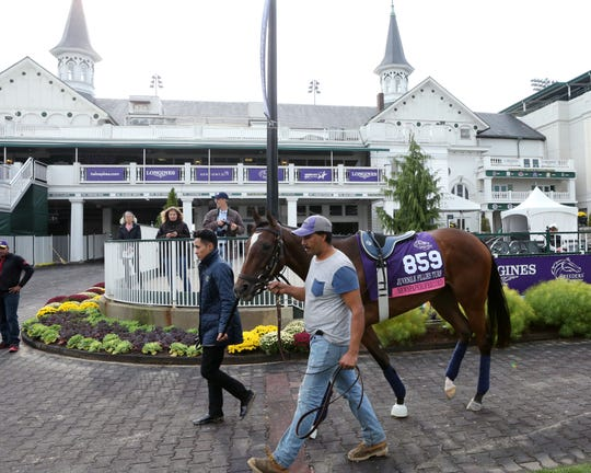 Newspaperofrecord in the paddock at Churchill Downs prior to the 2018 Breeders' Cup.