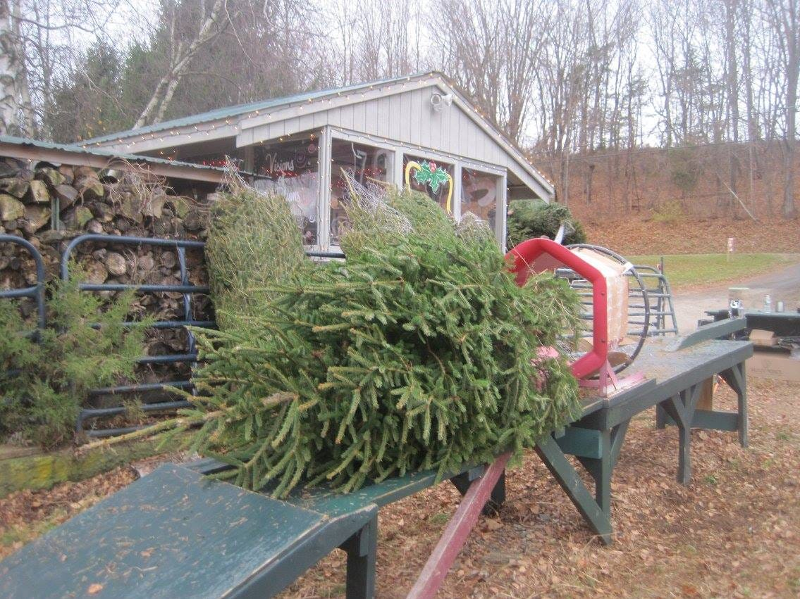 A tree is ready to go into the baler at Country Heritage Farm, 129 Plains Rd. in Augusta. The cut-your-own Christmas tree farm has Douglas Fir, Norway Spruce, Blue Spruce and Fraser Fir, along with wreaths and greens. On special days, the Farms' beautiful Newfoundland dogs deliver the trees by wagon.