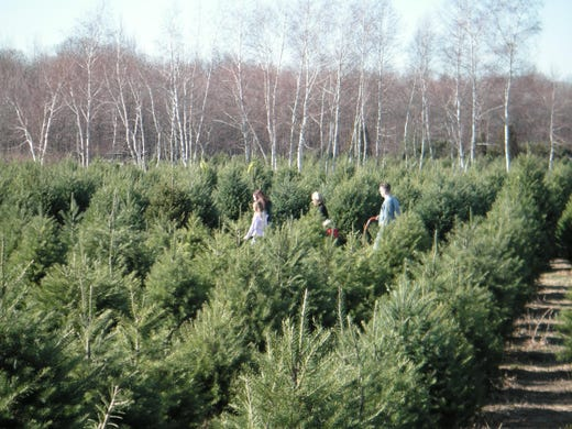NJ Christmas Trees: Here's Where To Cut Your Own Tree