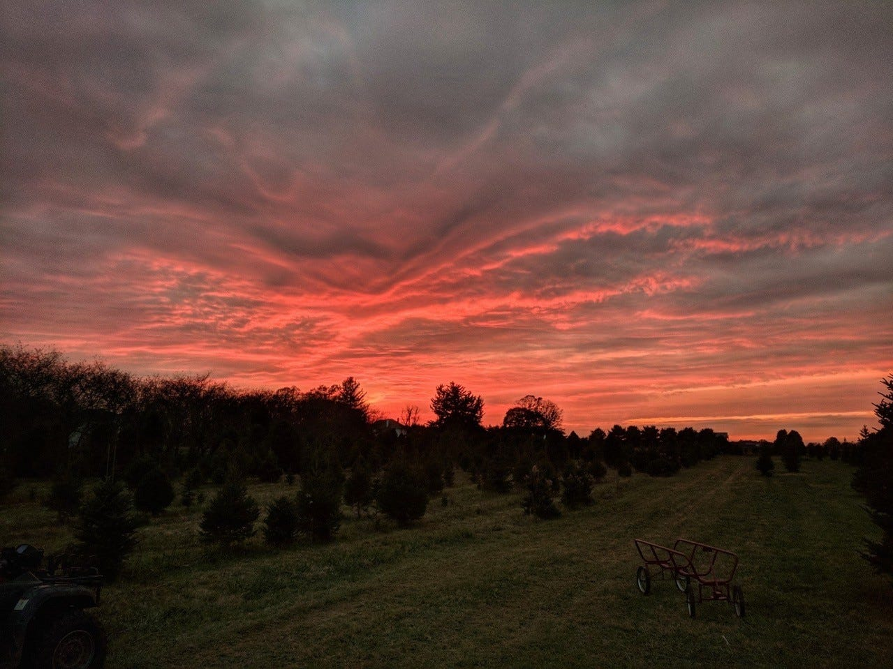 Sunset falls over Barclay's Tree Farm, 35 Orchardside Dr., Cranbury. The farm sells cut-your-own trees of Blue Spruce, Norway Spruce, Douglas Fir, Concolor Fir and Fraser Fir, along with wreaths and greens.