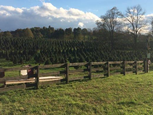 Shale Hill Christmas Tree Farm | Nzkshq