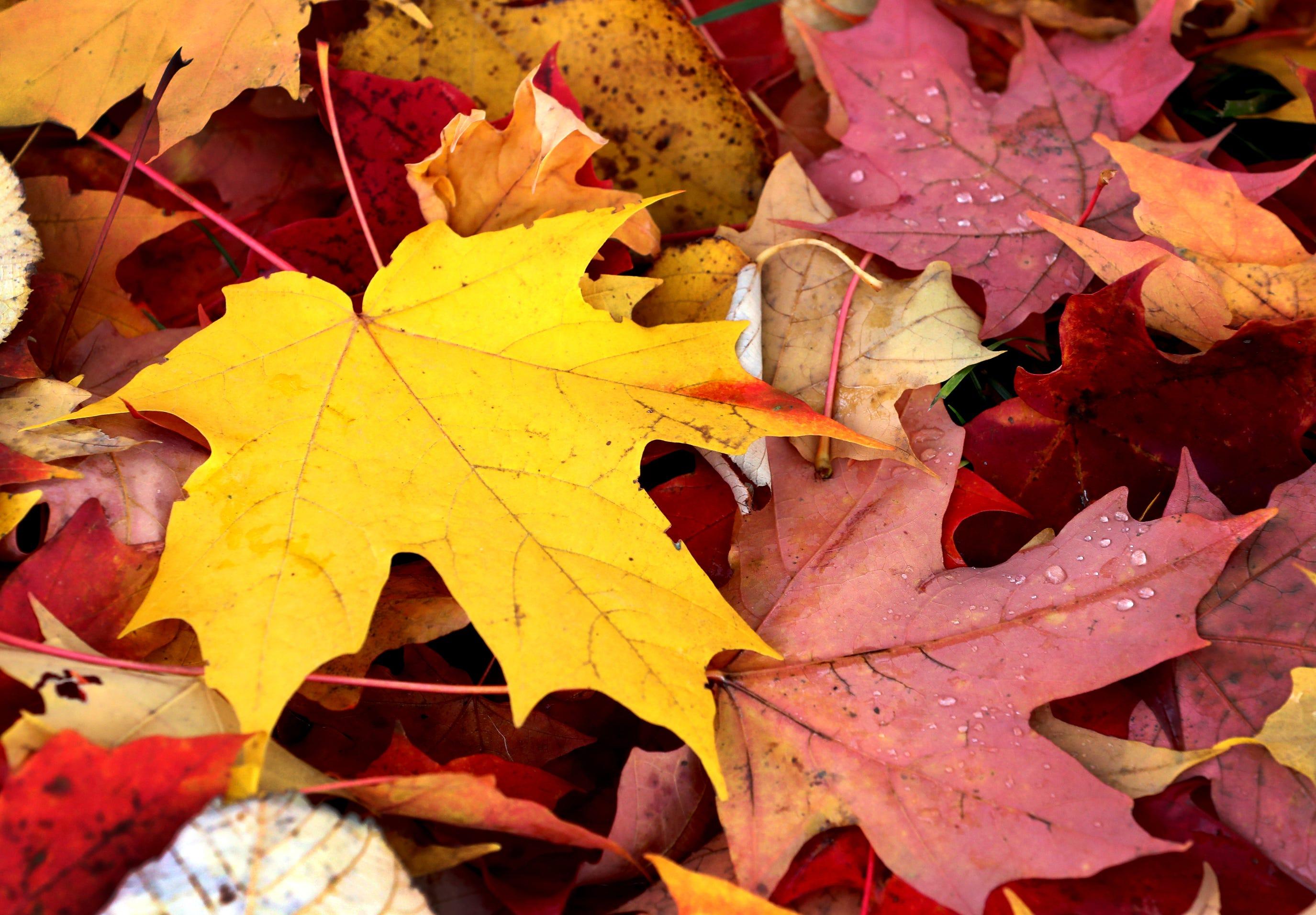 Phoenix Fall Bucket List Best Things To Do In Autumn In Arizona