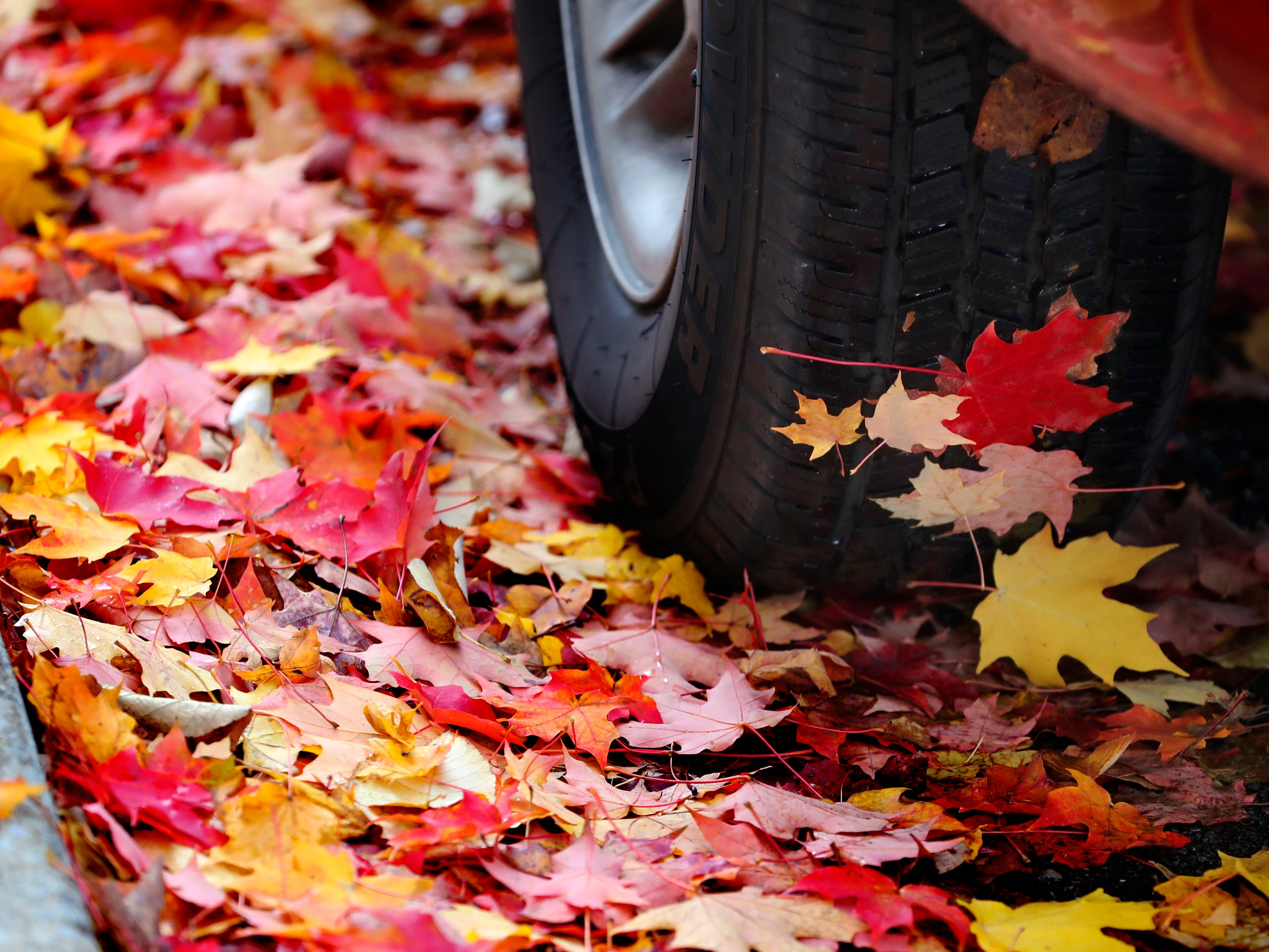 Colorful leaves cling to the truck tire of a vehicle that parked  on the  Murfreesboro Public Square, on top of a bed of colorful fallen leaves, on Thursday, Nov. 1, 2018.