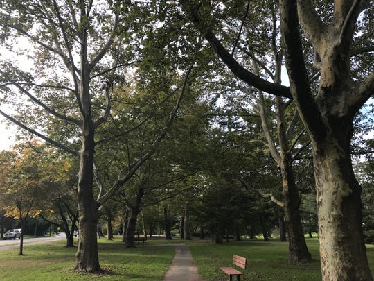 The Nutley Memorial Parkway is a pathway of 427 trees winding through four parks, one for each Nutley resident who served in WWI.