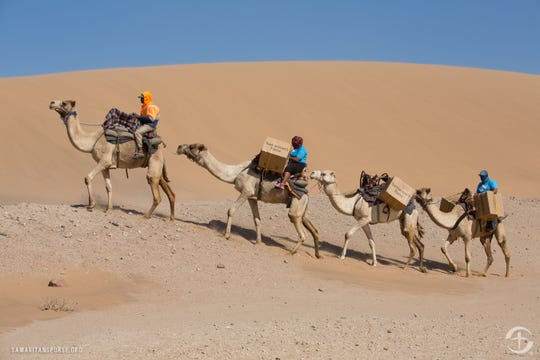 Delivery by camel in Namibia.