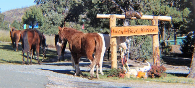 Hanging out at Lazy Bear Retreat.