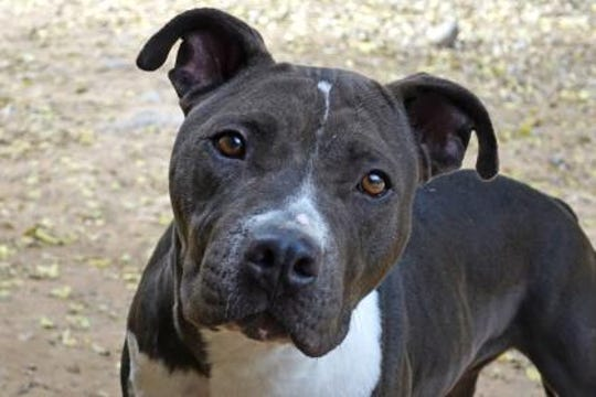 Gemini is a sweet 5-year-old and well trained.