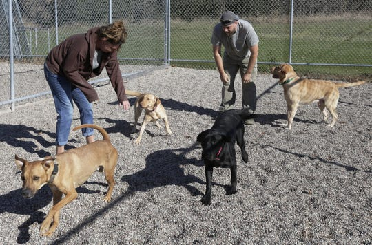 Lisa Bowen and Matt Mokler play with dogs Wednesday, Oct. 31, 2018, in the recreation area at Curve Crest Kennels & Suites, 414 State 26. The couple bought the Nekimi business in June from Dave and Bev Juedes.