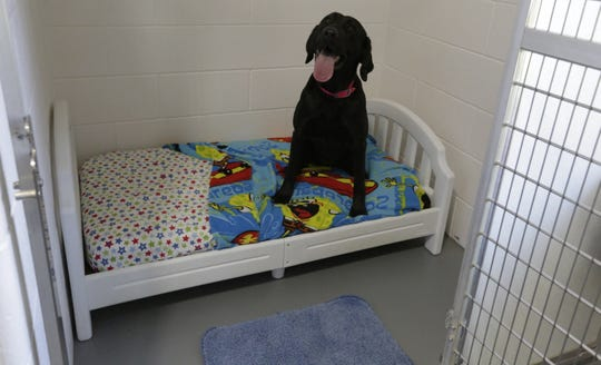 A boarder sits in one the suites Wednesday, Oct. 31, 2018, inside Curve Crest Kennels & Suites, 414 State 26.