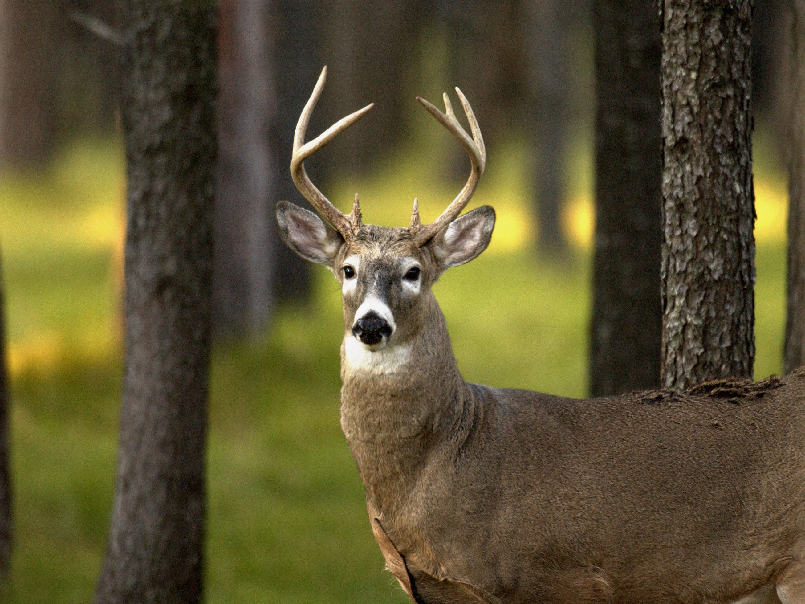 State steps up chronic wasting disease surveillance