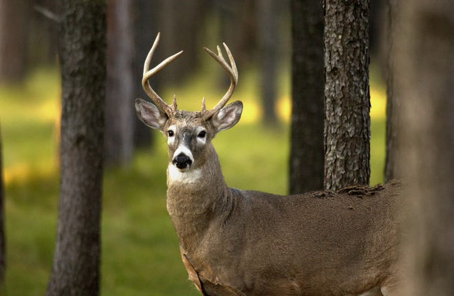 The state is stepping up chronic wasting disease surveillance and information efforts.