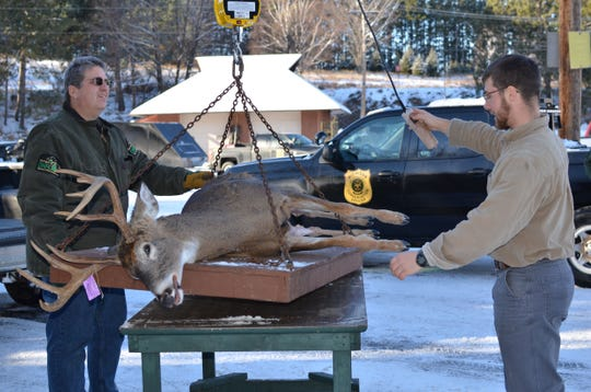 Michigan Department of Natural Resources wildlife biologist Brian Roell and wildlife technician Caleb Eckloff get ready to weigh a deer at the Marquette DNR check station.