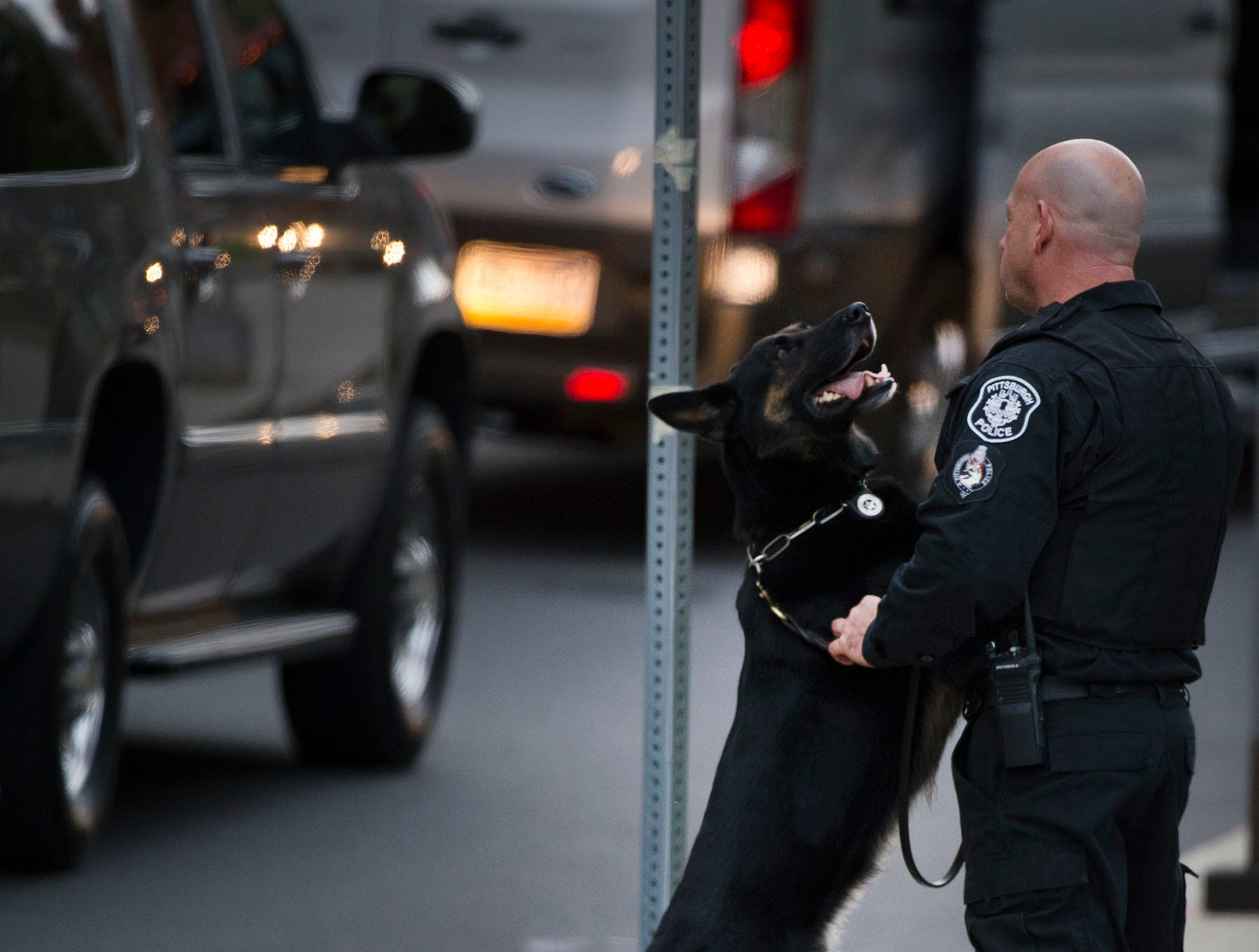 A Pittsburgh police dog is restless with his trainer as they wait for President Trump at UPMC, Tuesday, October 30, 2018. A gunman entered the Tree of Life Congregation Synagogue in the Squirrel Hill neighborhood of Pittsburgh and opened fire on the congregants and engaged police, Saturday morning, according to officials. (Markell DeLoatch, Public Opinion/via USA Today Network)