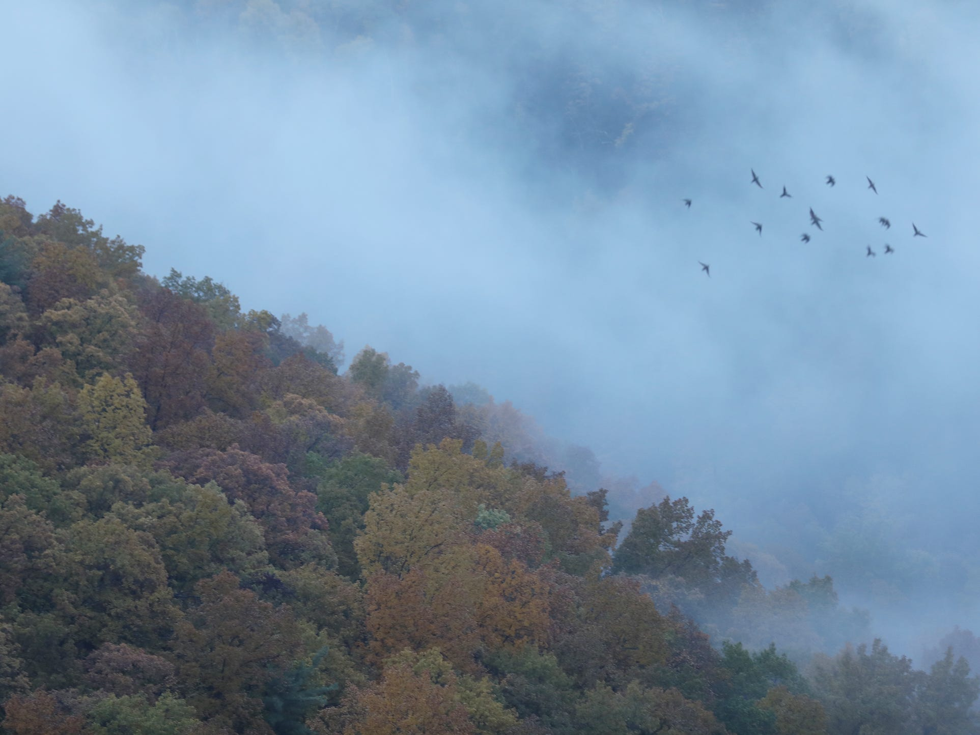 A flock of birds zoom across the gorge as fog rolls over the trees at the Archery Field Overlook in Letchworth State Park.