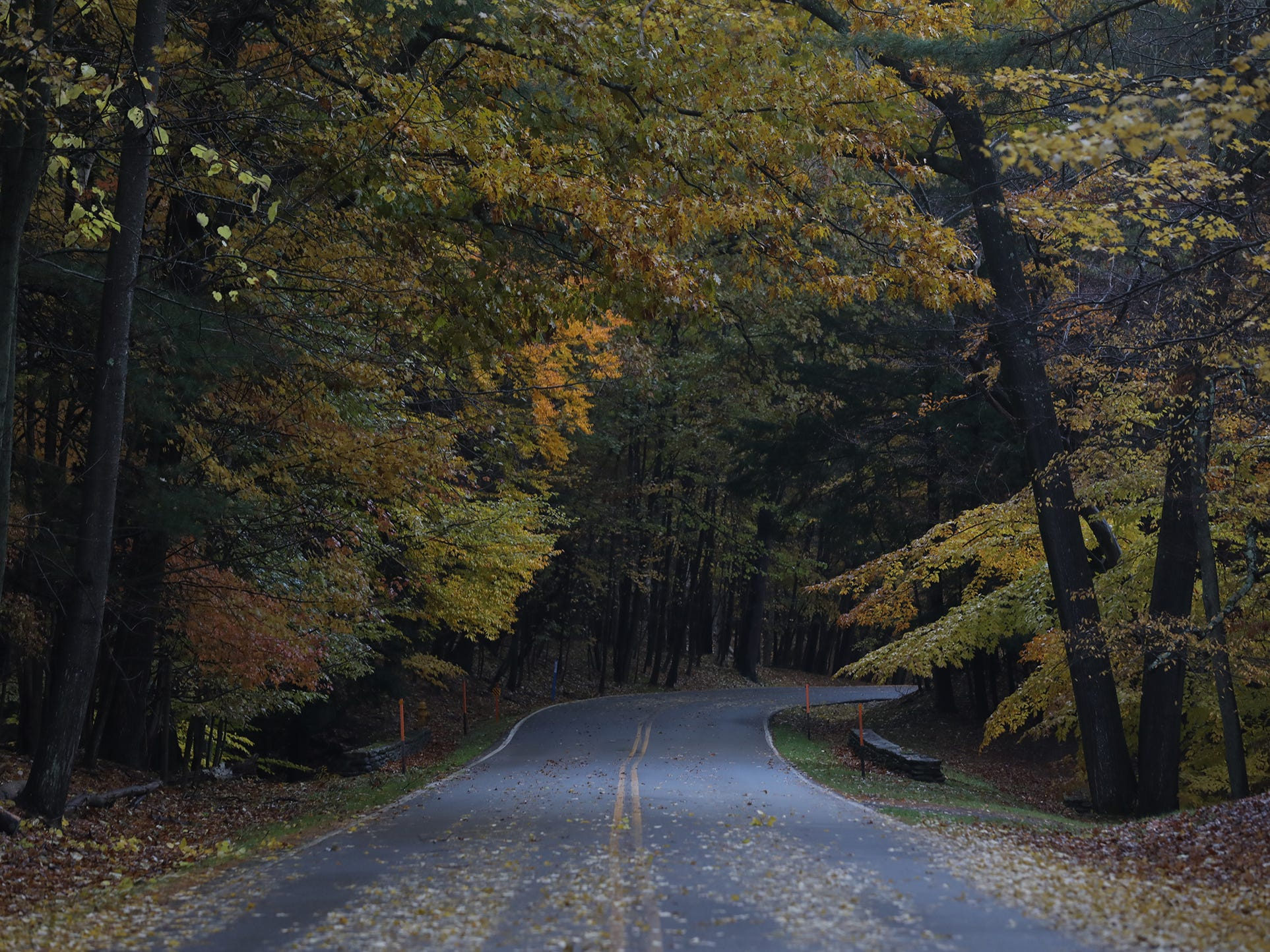 A canopy of color greets drivers on Park Rd. in  Letchworth State Park.