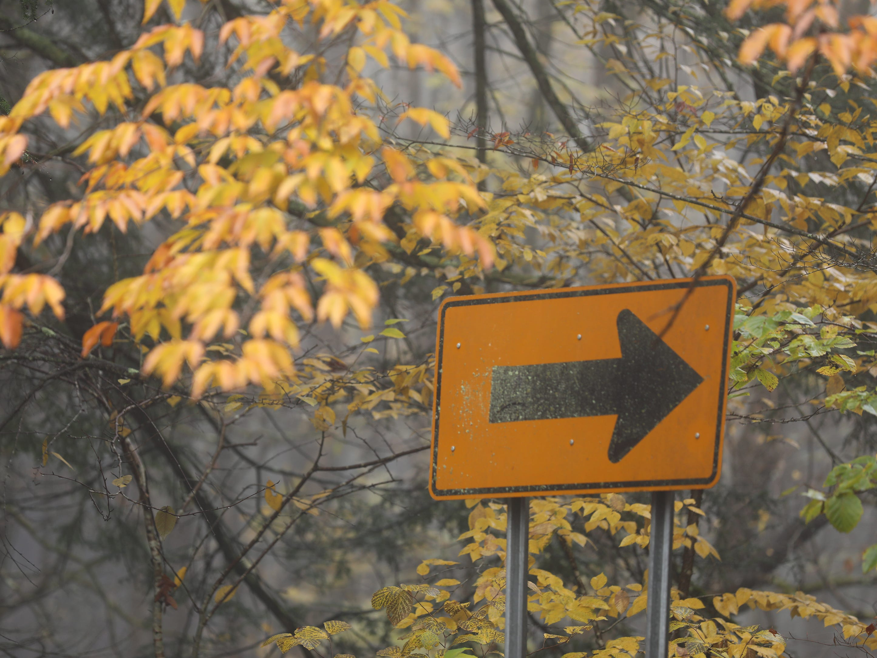 A sign warning of a curve on Park Rd. in  Letchworth State Park almost blends in with the colors.