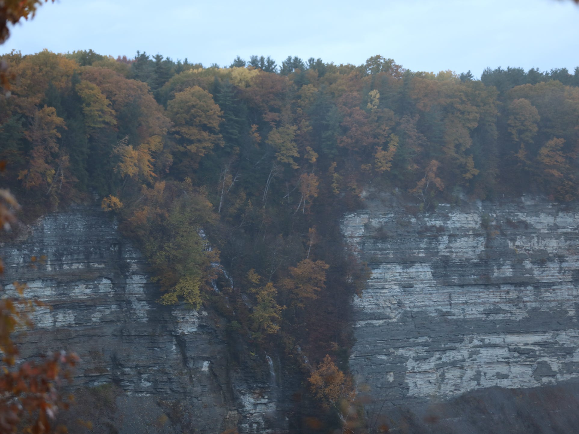 Even trees in the crevasses of the gorge at Letchworth State Park changed colors.