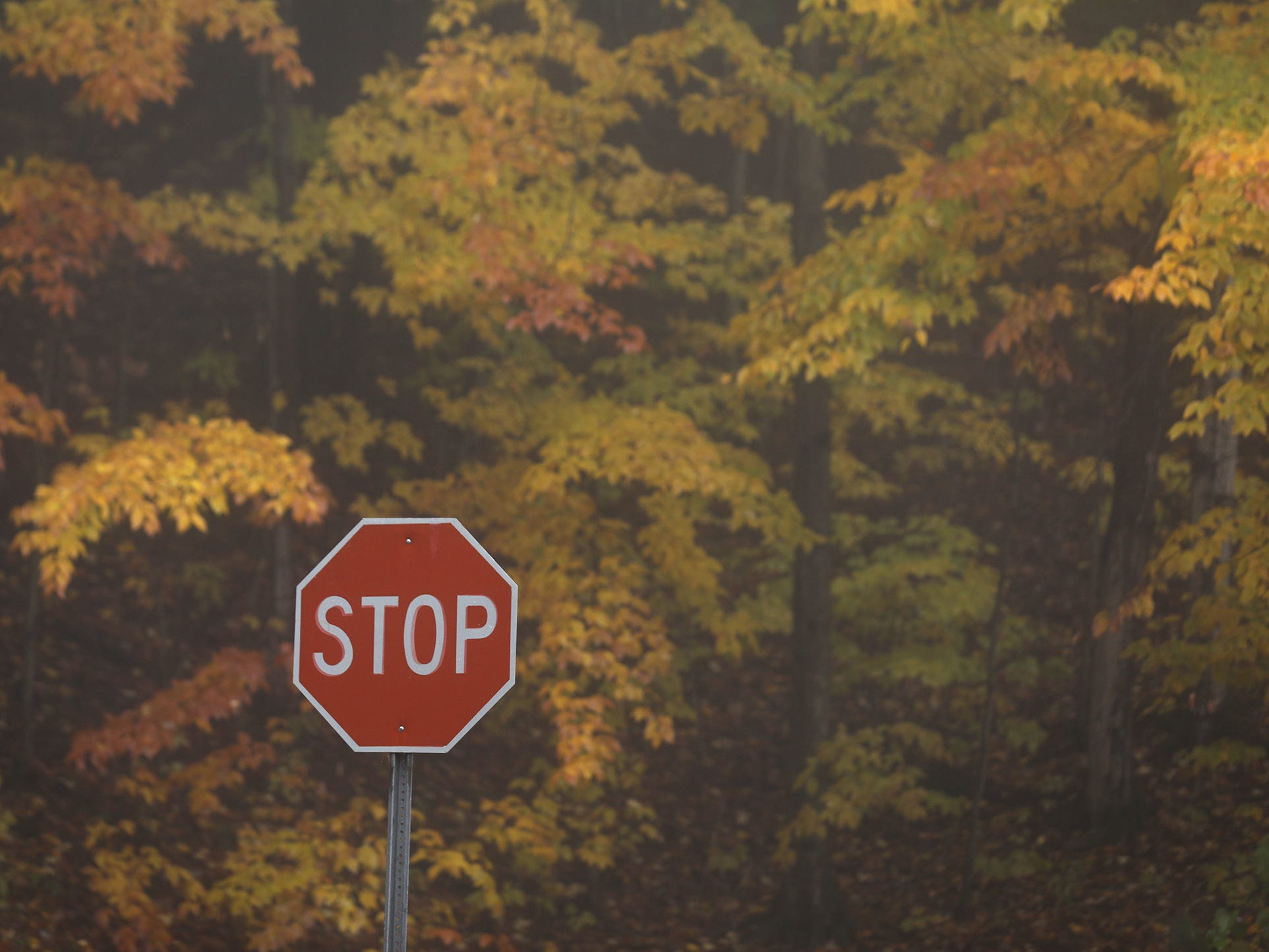 A stop sign's color almost matches the fall colors at Letchworth State Park.