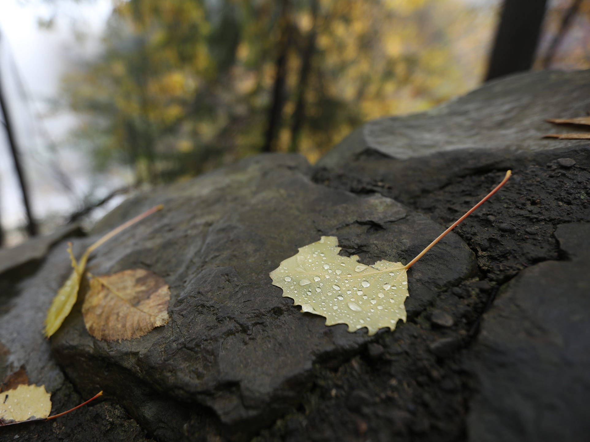 Water beads on a leaf at Letchworth State Park.