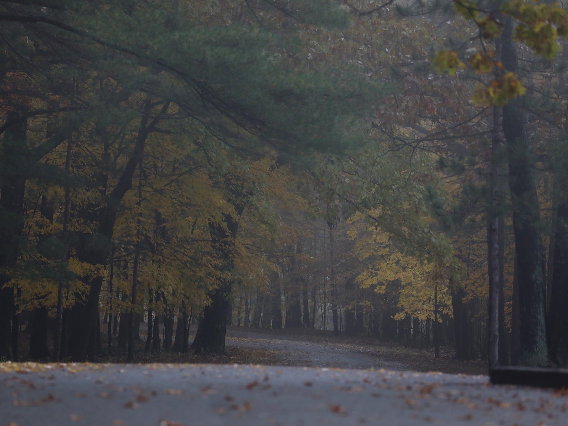 Fog makes portions of Park Rd. in Letchworth State Park darker.