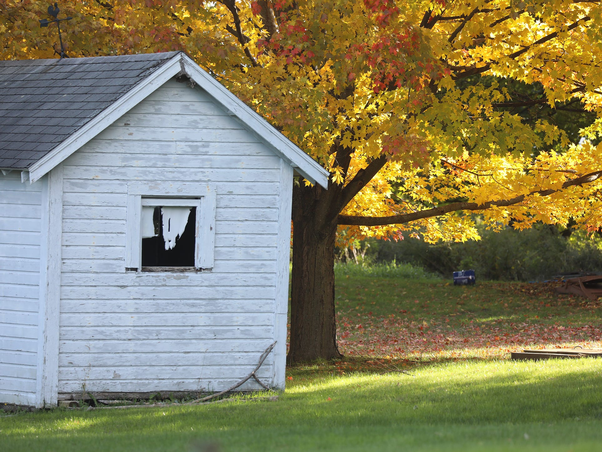 A white barn is in sharp contrast against a colorful tree in Honeoye Falls.