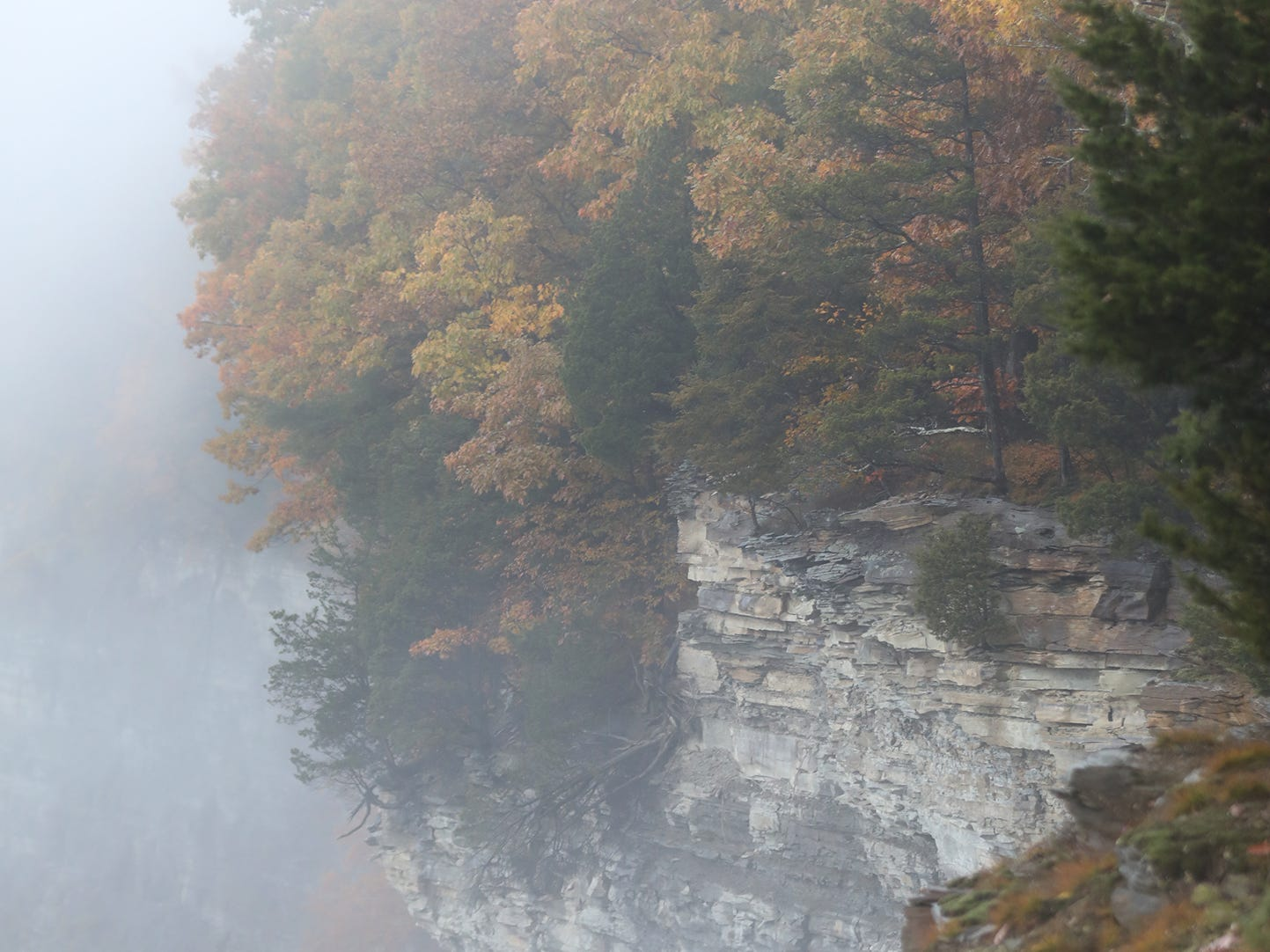 Pines trees break up the fall colors at Letchworth State Park.