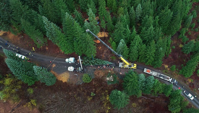 Two cranes lower the fresh cut U.S Capitol Christmas Tree on to a flatbed tractor trailer as state and local officials along with a select group of onlookers watched the tree being cut in the Willamette National Forest outside of Sweet Home, Oregon, Friday November 2, 2018. The tree will be secured in the truck and prepared for the 3,000 mile journey to the Washington D.C. in the coming days.