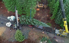 The U.S. Capitol Christmas Tree begins its cross-country journey