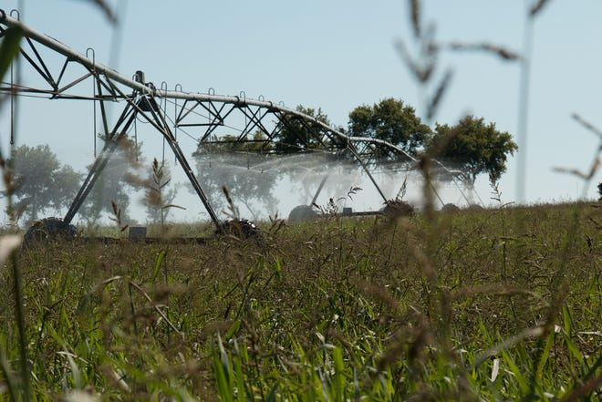 Del Monte maintains a 150-acre field near its Cambria, Wisconsin, plant, where a center-pivot irrigator releases spent wash water in a controlled application.