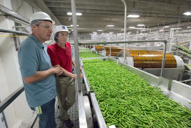 These green beans have passed the first processing at the Del Monte cannery in Cambria. Geoff Siemering (left) and facility manager Al Bodden watch the fast-moving belt coming from semi trucks just outside.