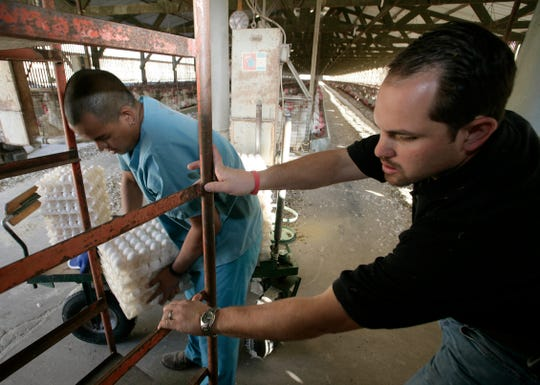 10/30/2008 8:46:17 AM -- Valley Center, CA, U.S.A -- Ryan Armstrong (right),  president of Armstrong Egg Farms, and Gilberto Delgado load fresh eggs onto a crate at the farm. Armstrong said there is no taste difference in the taste of eggs from cage vs cage-free areas. He said only brown hens are in the cage free areas, because people typically associate brown hens as cage free.-- There is a California ballot measure that would force egg-laying hen owners to give hens much more space, which farmers say would put them out of business and increase food safety risks.  ORG XMIT: RB 35391 Animal Law 10/30/2008  (Via MerlinFTP Drop)