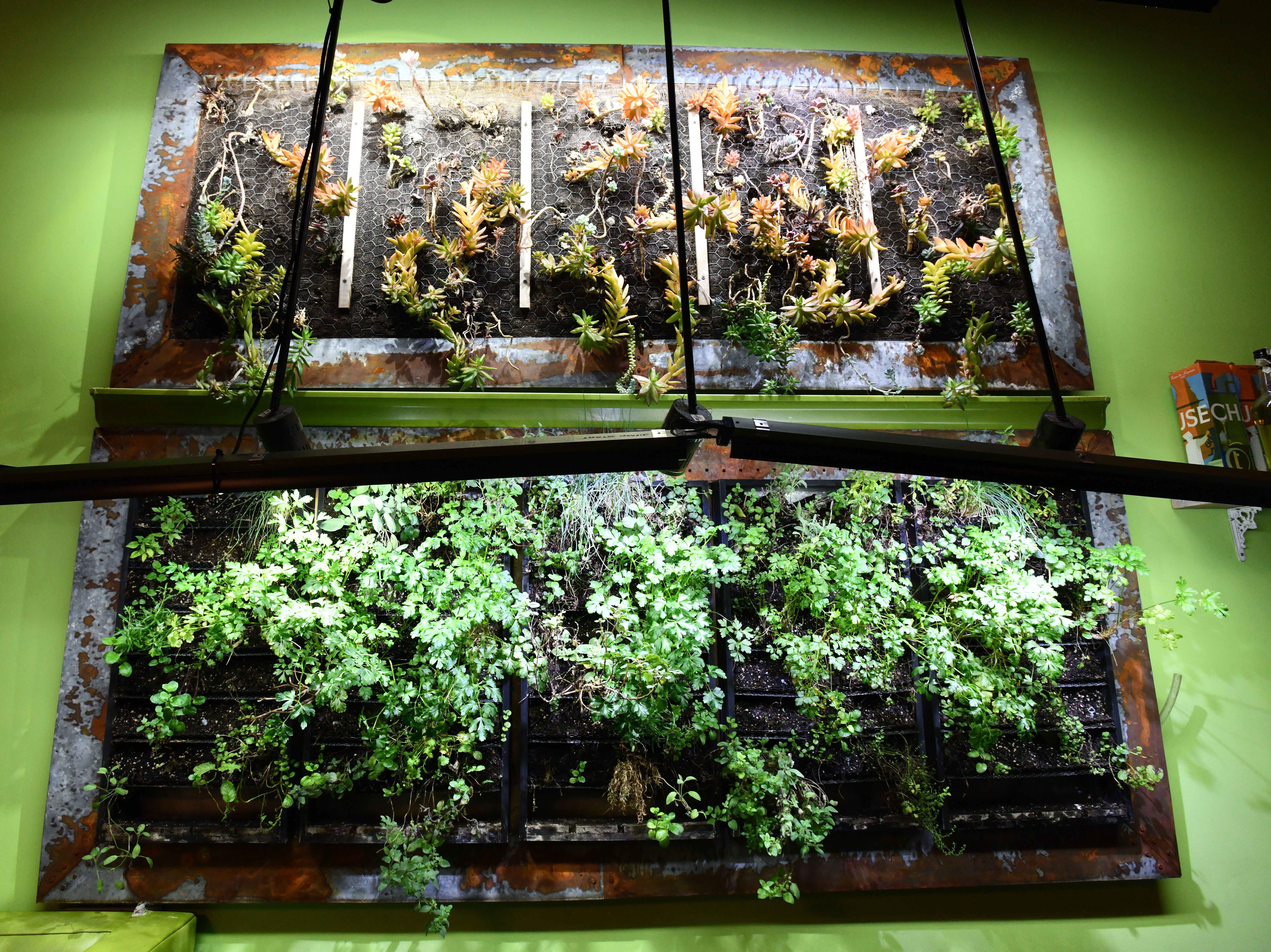 A wall garden in the bar area of Chartreuse Kitchen and Cocktails.