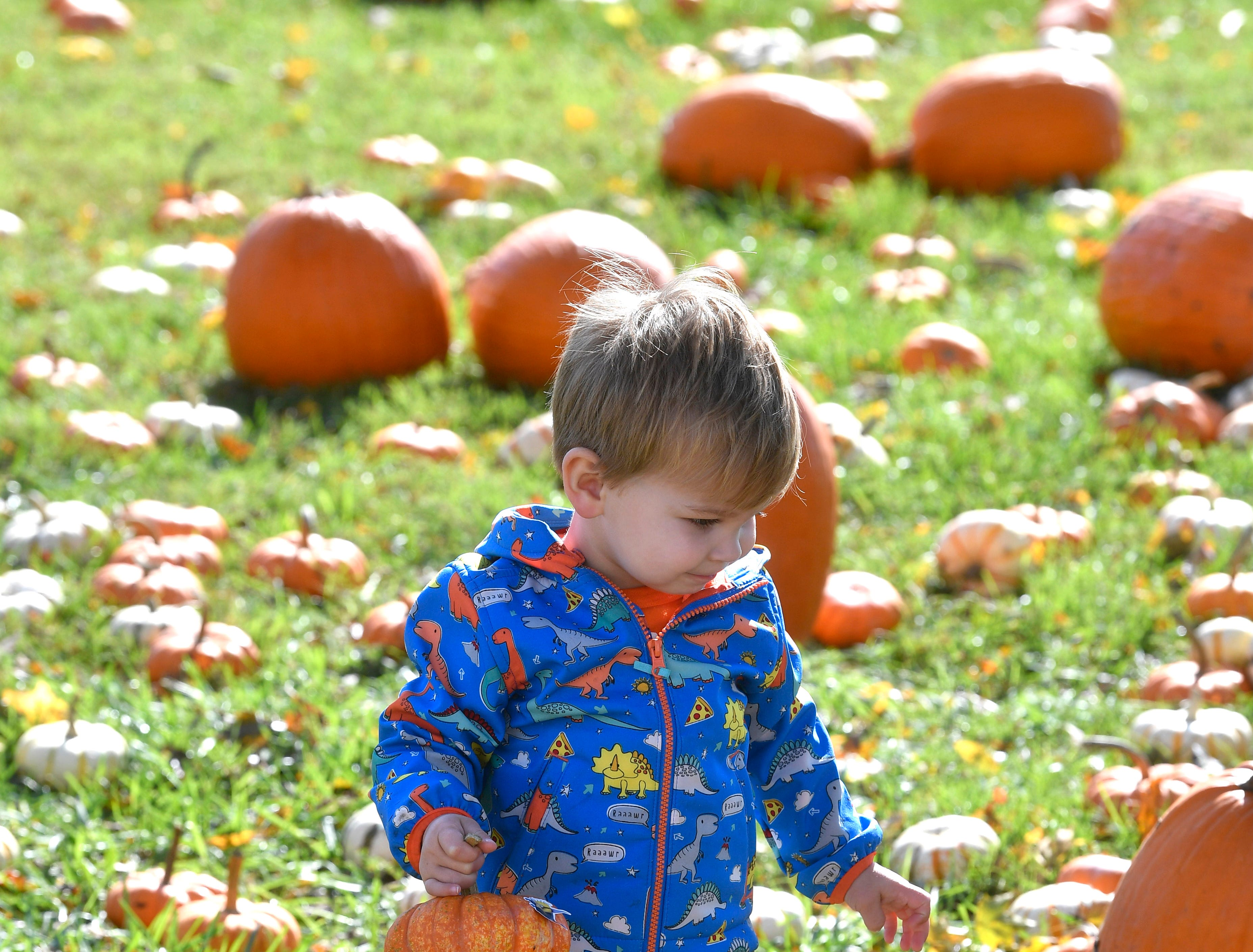 Owen Peters found the pumpkin he wants during Family Day at the Park at Harlinsdale Farms Saturday Nov. 3, 2018, in Franklin, Tenn.