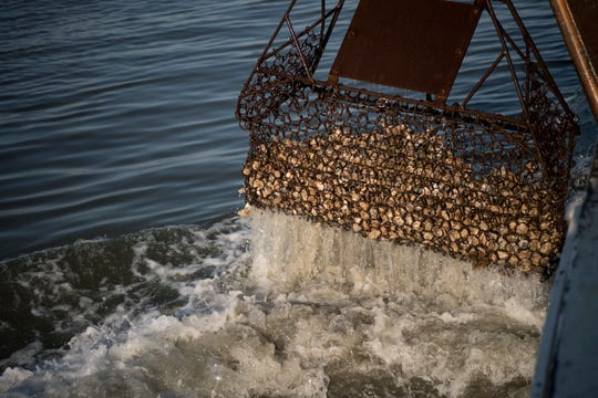 A dredge pulls oysters from the water on the Delaware Bay on Thursday, November 1, 2018.
