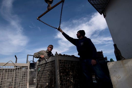 (left) Terry Smith and John McVey prepare to attach a large cage of oysters to a crane in order to move it off of an oyster boat on Thursday, November 1, 2018.