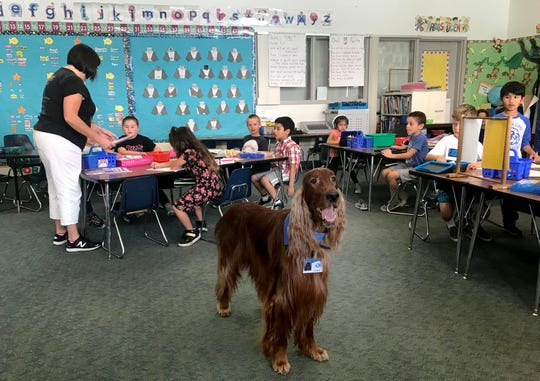 Quinn stands ready as first-graders get ready to read to him at Tierra Linda School in Camarillo. The therapy dog comes to the school three times a week and students practice their skills reading aloud to him.