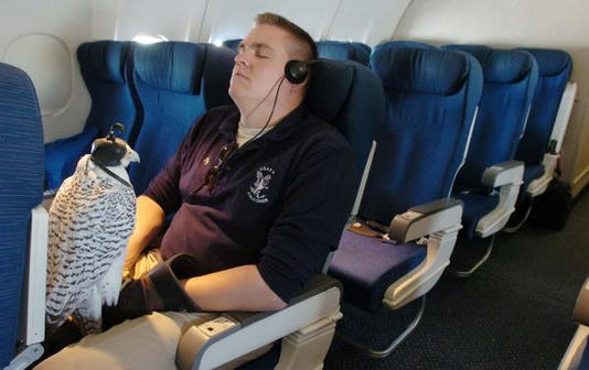 Air Force Falcon Mascot Injured