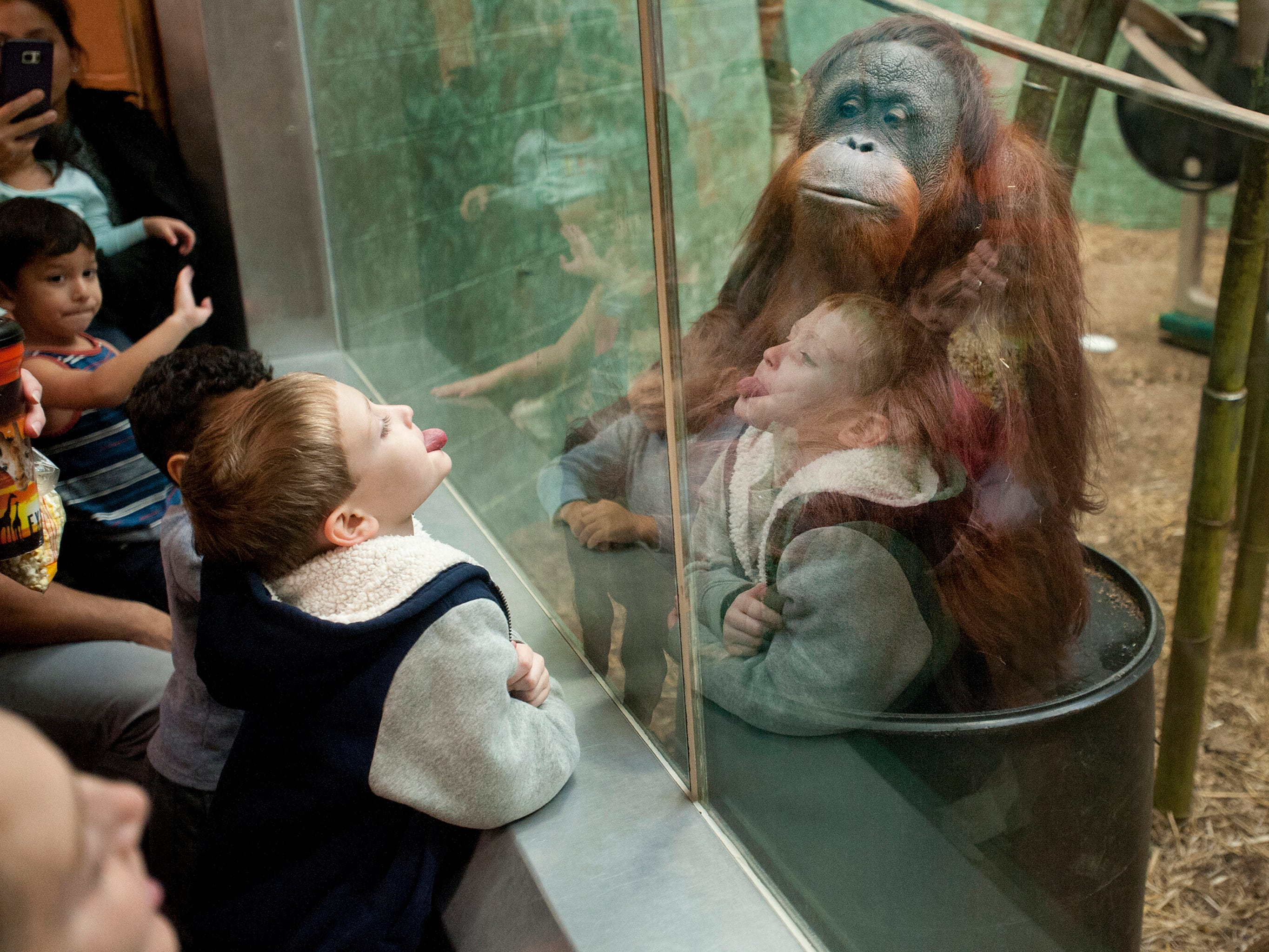 Tyler Edwards, age 6, of Fairdale, sticks his tongue out at Bella, an orangutan at the Louisville Zoo, watching him through a glass partition. November 04, 2018