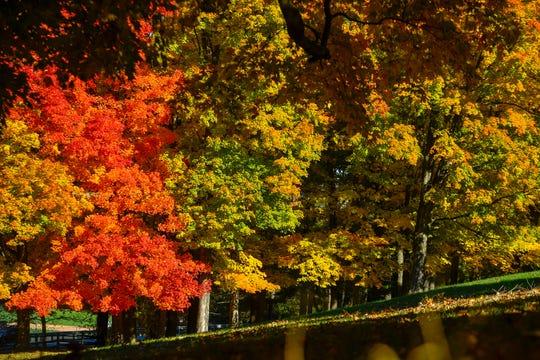 Brilliant fall colors at Reservoir Park in Spring Garden Township, Sunday, November 4, 2018. John A. Pavoncello photo