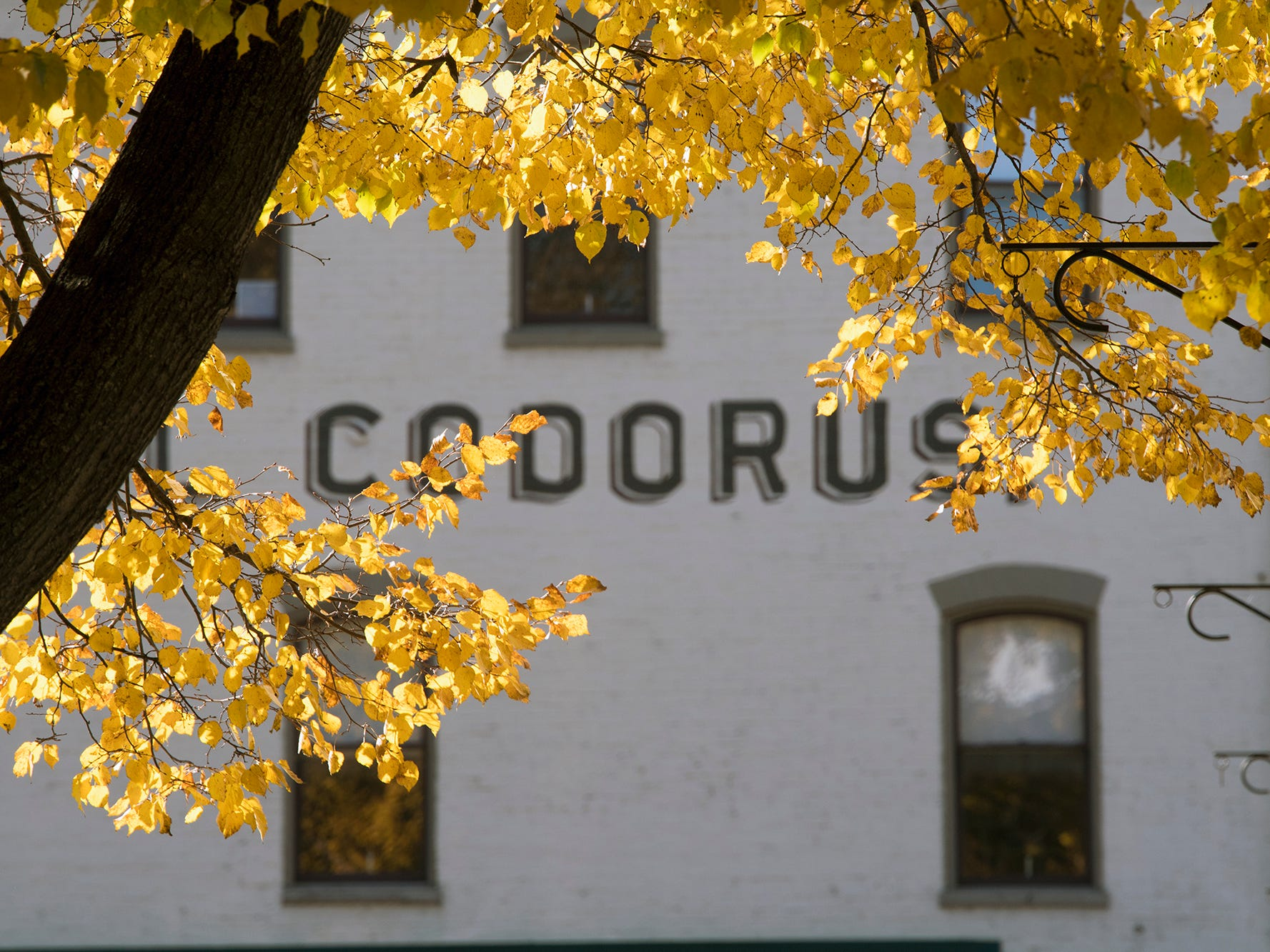 The Codorus Hotel building highlighting by golden leaves along the Codorus Creek in York Sunday November 4, 2018.