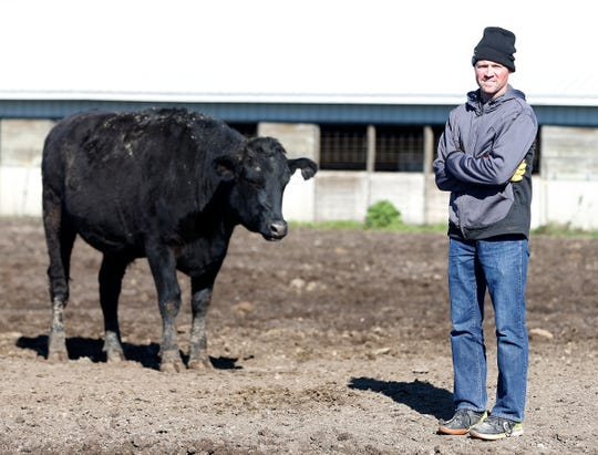 Blake Hansen and one of Hansen's new line of Wagyu-Holstein beef cattle. Photographed Tuesday, Oct. 16, 2018, in Hudson, Iowa.  Hansen recently rolled out the Cedar Valley's first Holstein-Wagyu hamburger at Hansen's retail stores in Waterloo and Cedar Falls, with the rest of the cuts available for sale privately through Hansen.