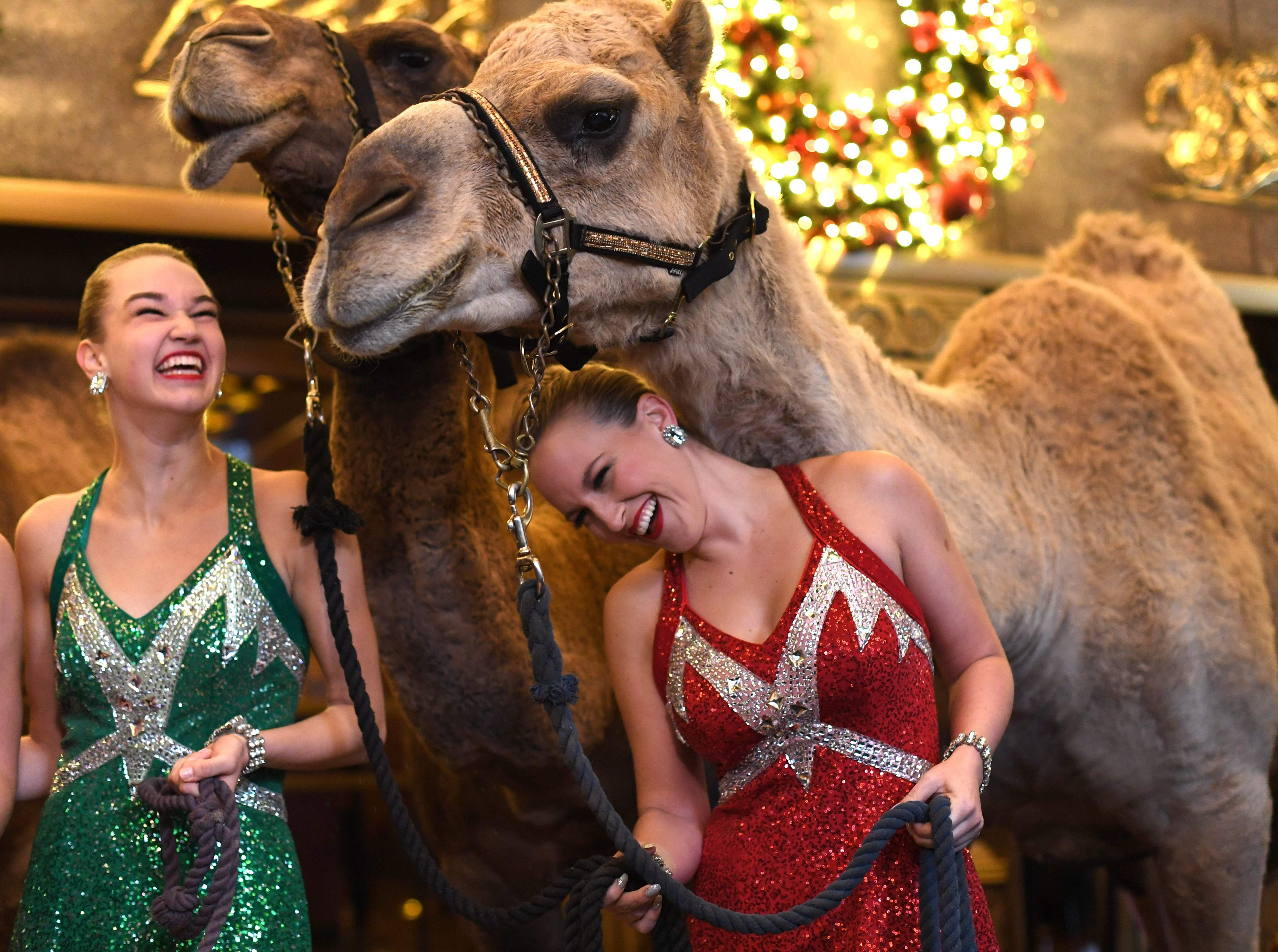 Radio City Rockettes Samantha Harvey and Kathleen Laituri (L) pose with camels as the Radio City dancers  welcome the camels, sheep and donkey back to Radio City Music Hall November 5, 2018 for their starring role in the Living Nativity scene in the 2018 production of the Christmas Spectacular Starring the Radio City Rockettes. (Photo by TIMOTHY A. CLARY / AFP)TIMOTHY A. CLARY/AFP/Getty Images