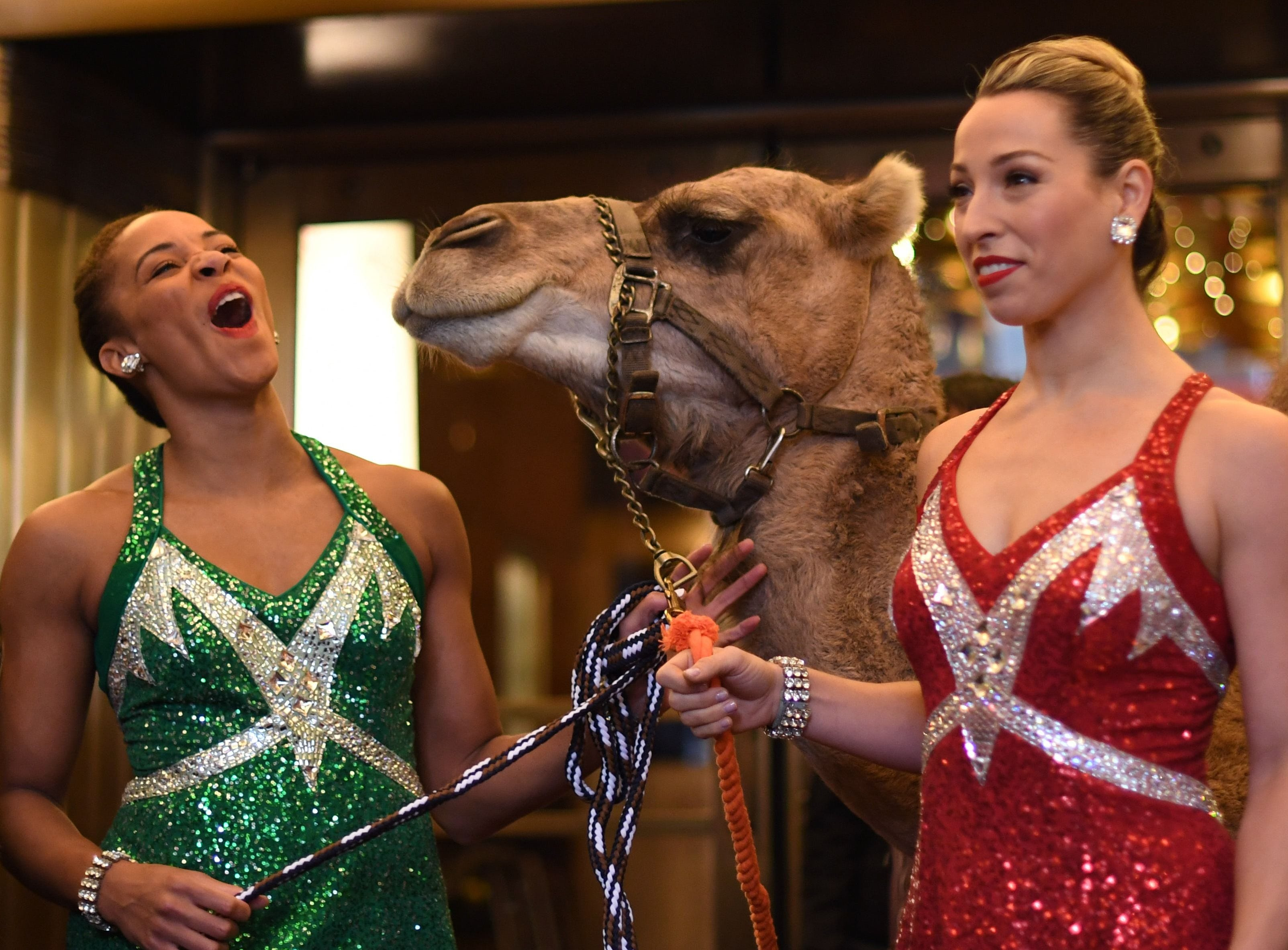 Radio City Rockettes Samantha Harvey(R) and Kathleen Laituri (L) pose with camels as the Radio City dancers  welcome the camels, sheep and donkey back to Radio City Music Hall November 5, 2018 for their starring role in the Living Nativity scene in the 2018 production of the Christmas Spectacular Starring the Radio City Rockettes. (Photo by TIMOTHY A. CLARY / AFP)TIMOTHY A. CLARY/AFP/Getty Images