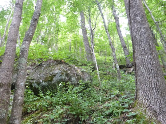 The Southern Appalachian Highlands Conservancy recently protected 123 acres on Brushy Knob, also known as Big Piney, in Black Mountain, to be managed as a nature preserve.