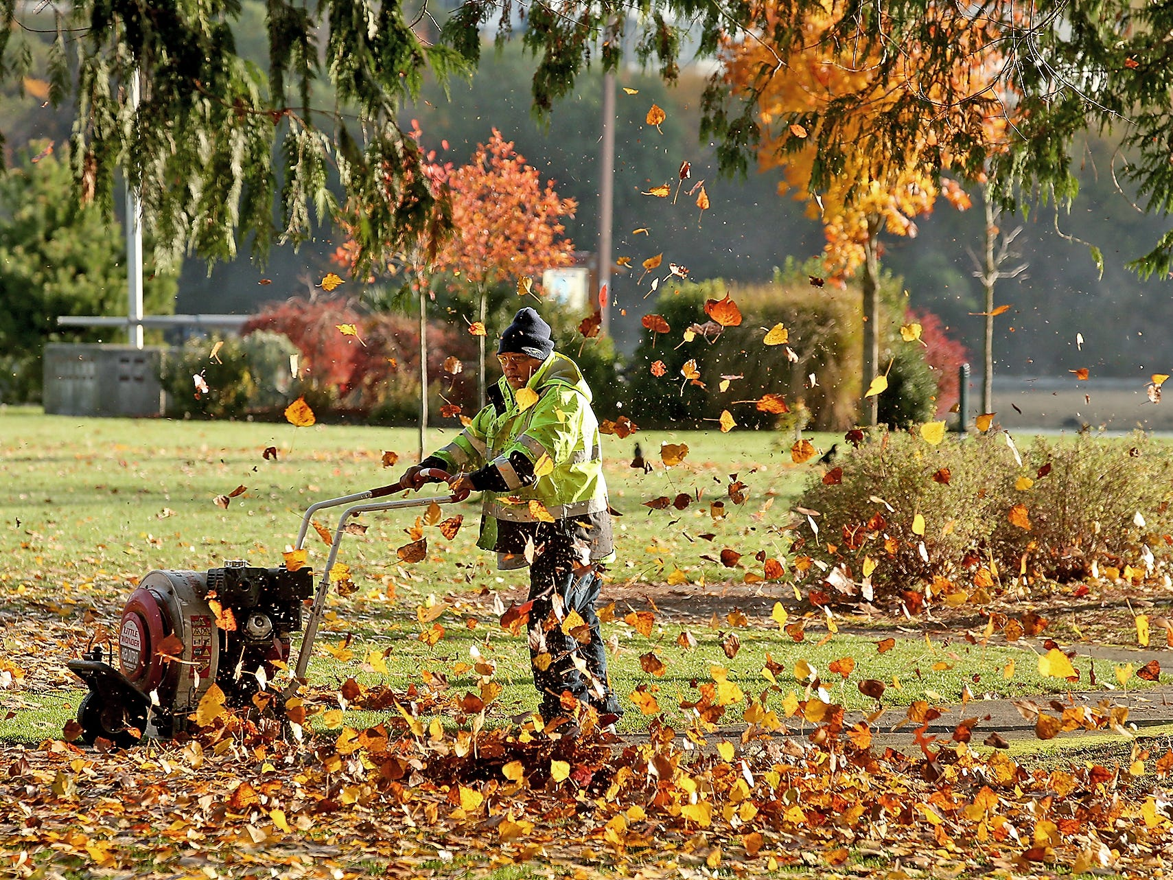 The leaves fly as Bremerton Parks Department's Rey Circulado blows them from the sidewalk in Bremerton's Evergreen Rotary Park on Monday, November 5, 2018.